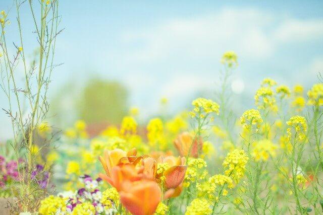 「幸せな人だけが知っている、シンプルな生き方」のレビュー。日々の生活で悩んだ時、前向きになれるヒントがあります。