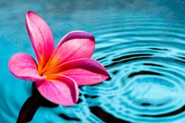 鈴木真奈美さんの夏至の瞑想会に参加した感想。